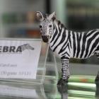 detalii-interior-zebra9819